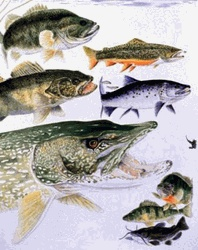Pinterest the world s catalog of ideas for Fish and game stocking report