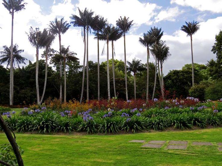 9. Jardín De Las Palmas.