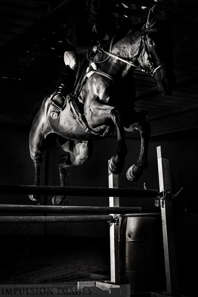 Black and white horse jumping photography for Black and white shows