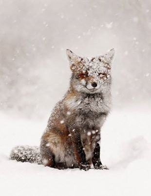 Waah! Should be in Nature but he/she looks so cute in the wintery snow :)