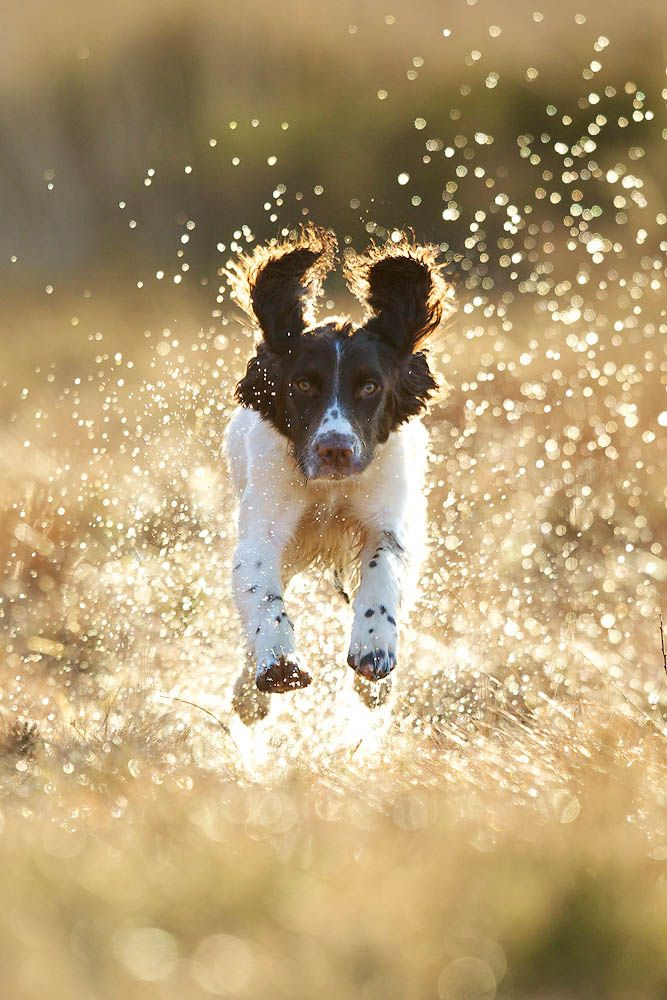 bounding - Wow, I can move fast!  What a great picture and this dog is having fun!!