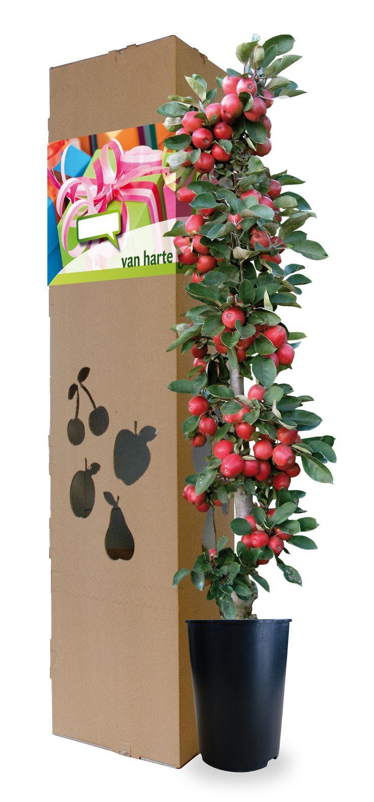 Je medewerkers een appelboom thuis laten sturen op hun verjaardag is super attent en een blijvende herinnering is gemaakt!