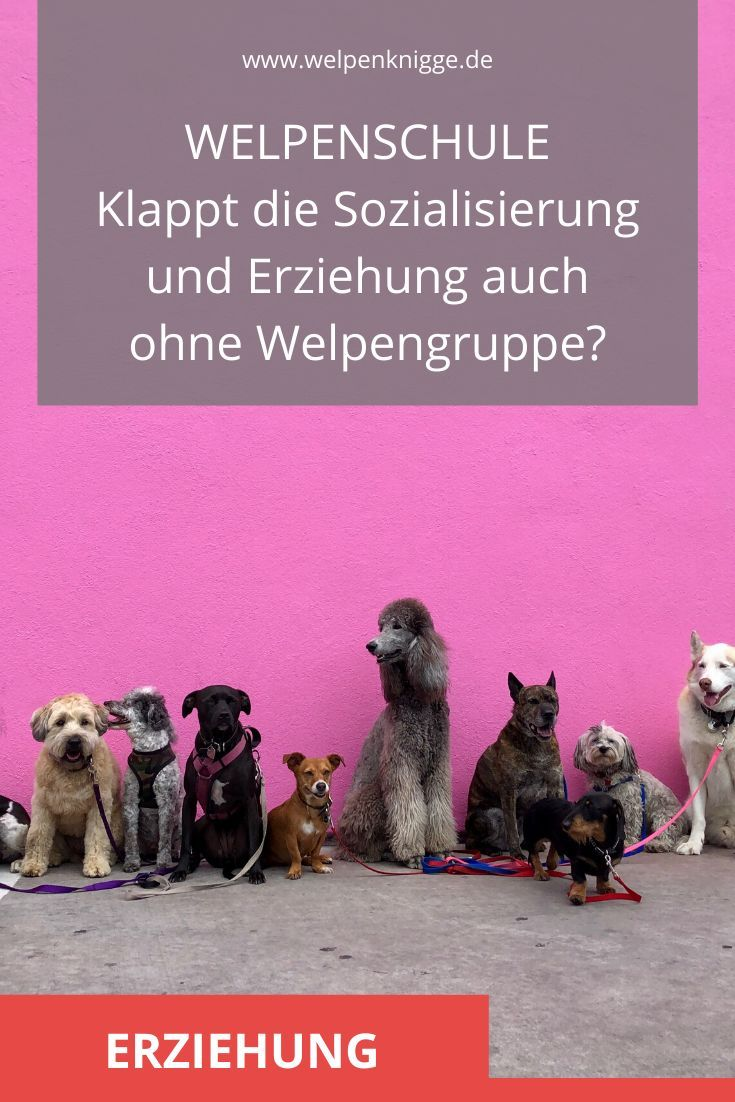 Welpenschule In 2020 Erziehung Hundeerziehung Welpen
