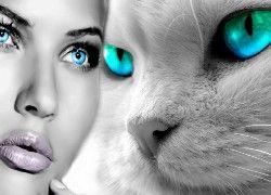 Kobieta, Kot, Porównanie