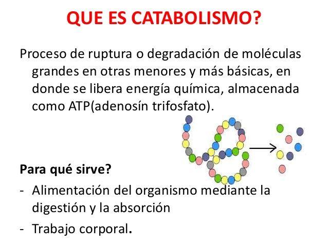 Catabolismo Energia Quimica Bioquímica Molecula