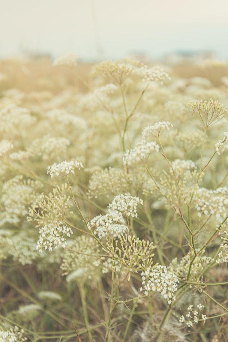 Степные травы, Заозерное, Крым