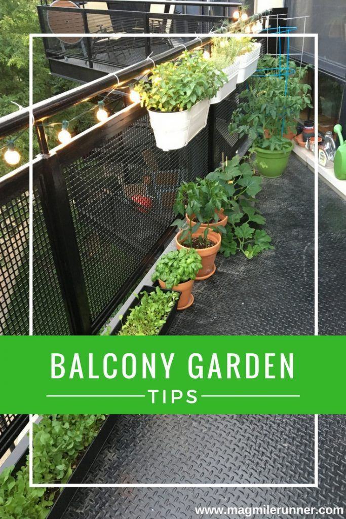 How to Start a Balcony Garden Health and Happiness Pinterest