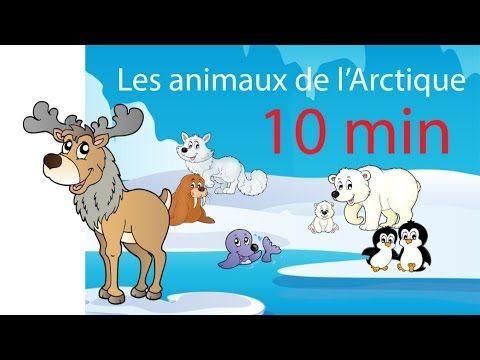 Apprendre les animaux de l'Arctique et leurs cris - 10 minutes de jeux et comptines - YouTube