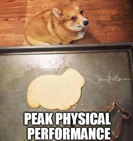 https://pt.johnnybet.com/prognostico-superliga-feminina-de-volei-2017#picture?id=9298 #dog #pancake #art #funnymemes #performance