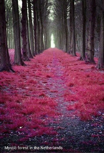Forest in Netherland
