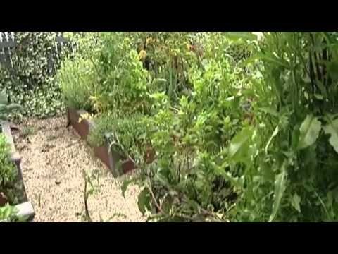Огород без хлопот - грядки и рассада ( 1 серия )