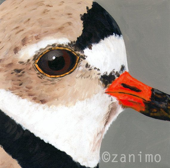 Piping Plover  Pluvier siffleur by Zanimo on Etsy