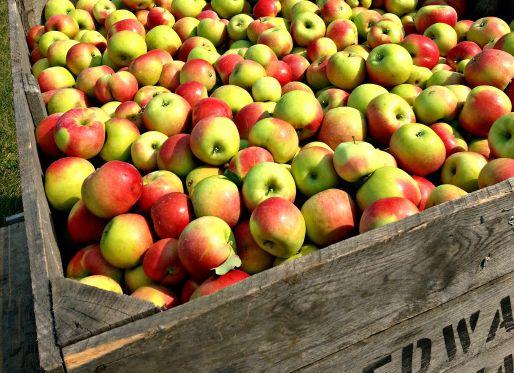 Best Apple Picking Near Chicago