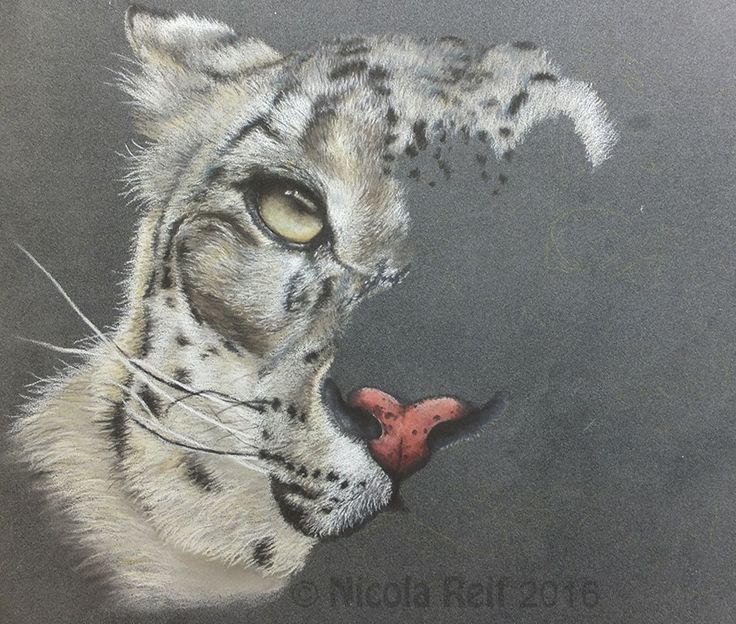 Pastel Pencil Pet Portraits & Animal Art. Photo reference Sarah Lindh Photos for Artist Facebook page. For your own pet portrait contact me @nicolareifillustration