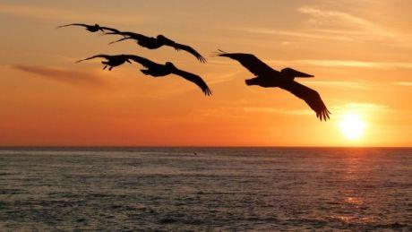 Un eveniment bizar din Oceanul Pacific poate avea EFECTE DEVASTATOARE asupra climei
