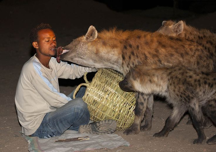Animals and Humans | Eric Lafforgue Photography - Hyena feeding, Harar, Ethiopia