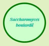 Saccharomyces boulardii is a probiotic yeast
