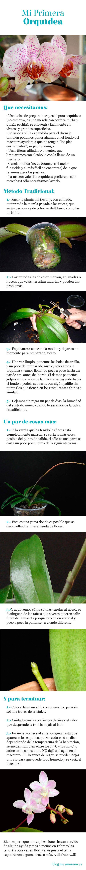 Orquídeas / Consejos