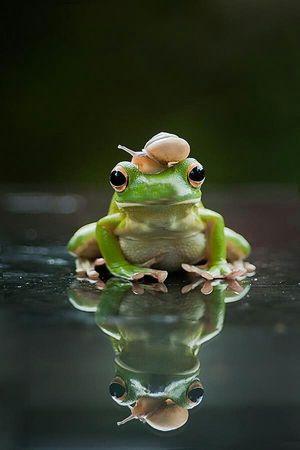 カエル画像まとめ