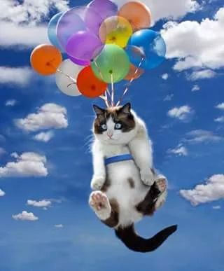 Hanging in there. Balloons, cat