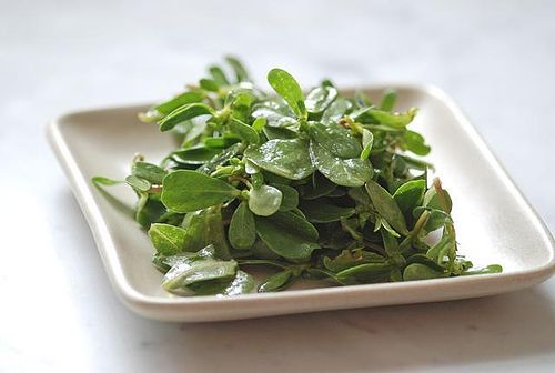 Purslane has crazy amounts of omega-3s, and I finally found some! It's great to eat raw with lemon and oil dressing.