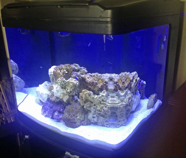 Don't let a limited amount of space or money keep you from setting up a small saltwater aquarium.