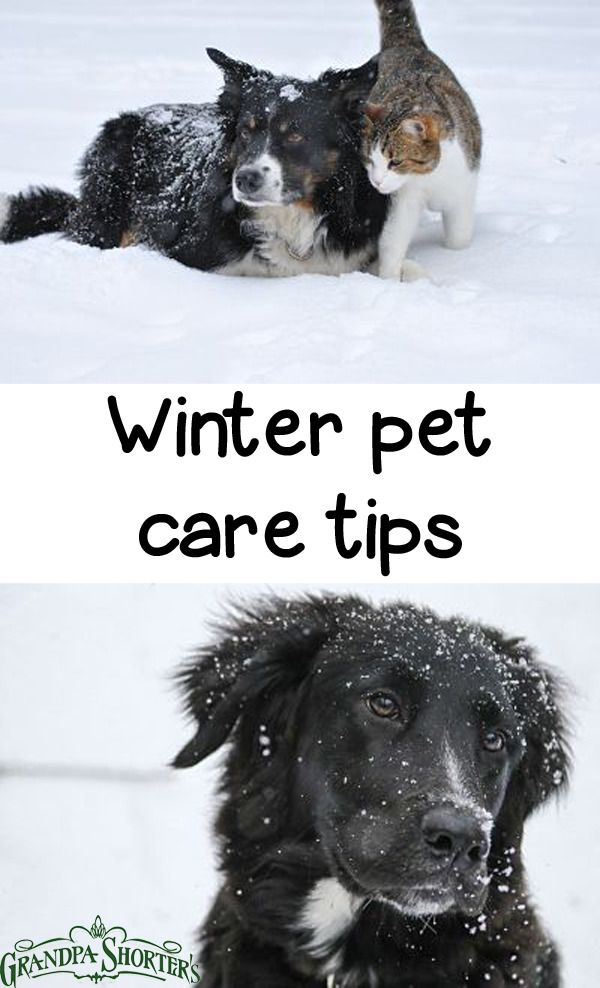 Winter Pet Care Tips Grandpa Shorter S Gifts Pets Pet Care Big Animals