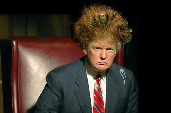 Presidential Heir Apparent Donald Trump—Funniest Hair Memes!