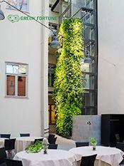 Plantwall, Vertical garden, groene wand, verticale tuin, Pflanzenwand, Kasviseinä, Viherseinä, Green Fortune, OLO, Helsinki, Finland