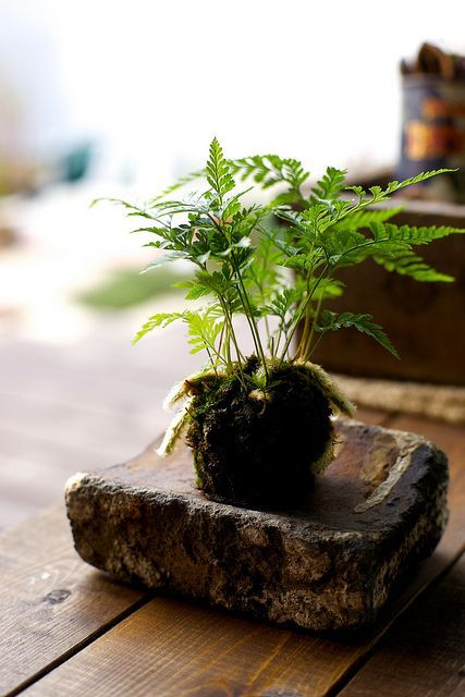 Petite Fern Served on Weathered Stone || Simply Beautiful | | { Houseplants 3 #kokedama