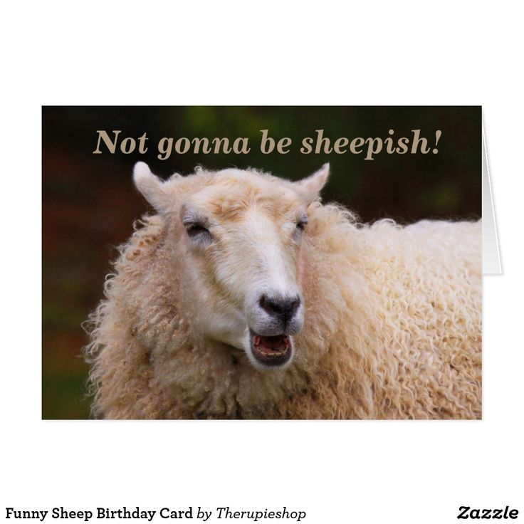 Funny Sheep Birthday Card