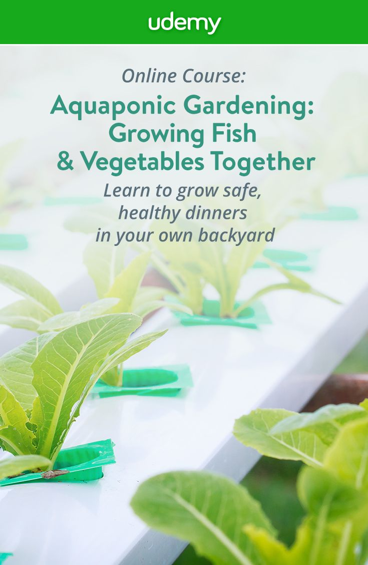 Grow safe, healthy fish and organic vegetables with no weeds right in your own backyard with aquaponics! This easy, step by step course will teach you everything you need to know to grow an entire dinner so you can start feeding your family safe, healthy food with no harmful pesticides or preservatives. Start living healthier today!