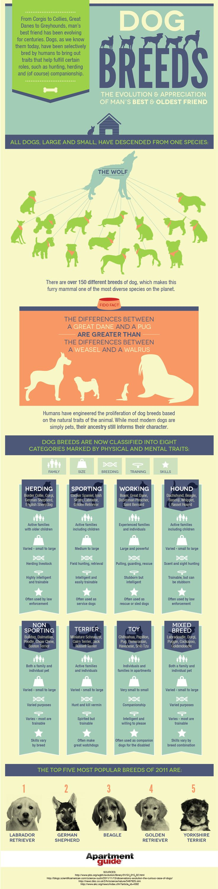 Did You Know There Are More Than 150 Different Breeds Of Dogs? Use Our Guide
