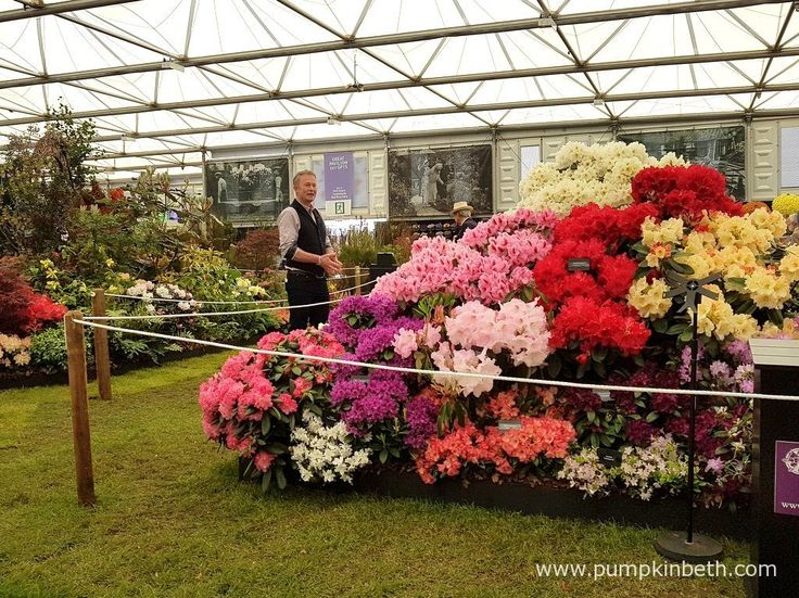 Toby Buckland broadcasting from Millais Nurseries' Gold Medal winning…