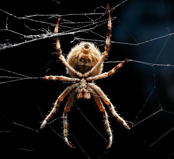 Australia'a Spider Man