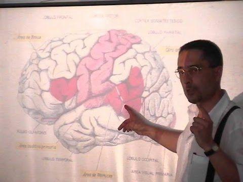Neurología 12 - Música y Lenguaje: Función del área de Wernicke - Prof. ...