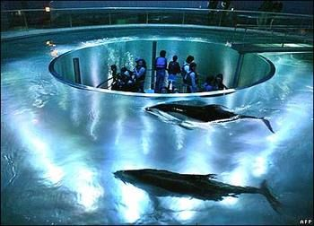 This doughnut-shaped tank allows visitors to get a diver's view of dolphins at a marine centre in Toyooka, Japan. Description from news.bbc.co.uk. I searched for this on bing.com/images
