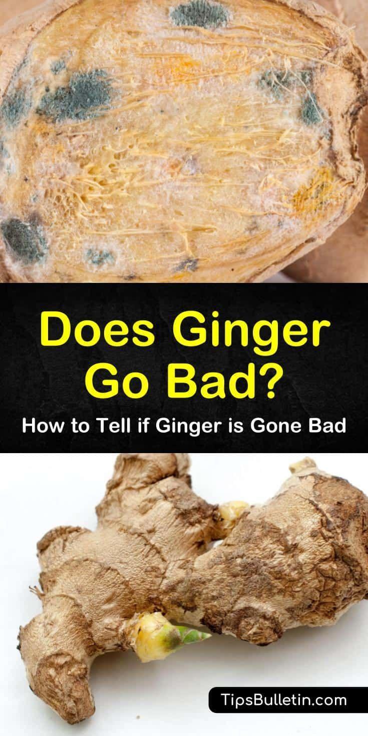 How To Tell If Ginger Is Gone Bad Ginger Root Recipes Ginger Tea Recipe Storing Fresh Ginger