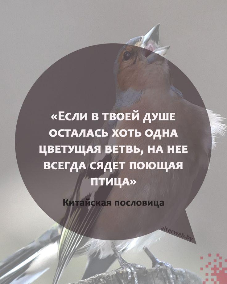 Если в твоей душе осталась хоть одна цветущая #ветвь, на неё всегда сядет поющая #птица  Китайская пословица  #поговорки #пословицы #жизнь #цель #вебмаркетинг
