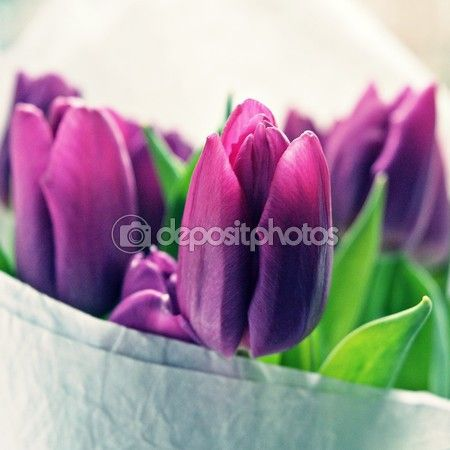 Flower Folder with Stock Photos and Vector Images | Depositphotos® #34683332