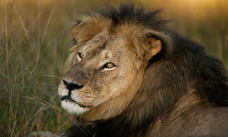 Cecil the Lion's child executed by trophy seeker