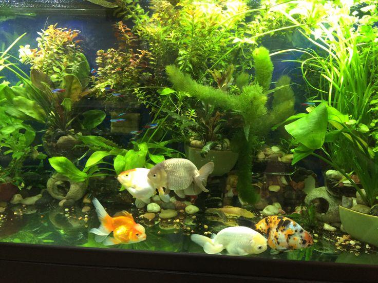 Best 25 Freshwater Aquarium Plants Ideas On Pinterest