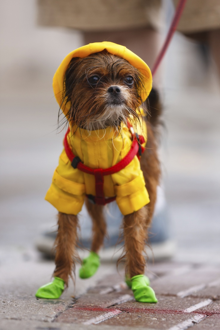 Where Can I Take My Dog When It Raining