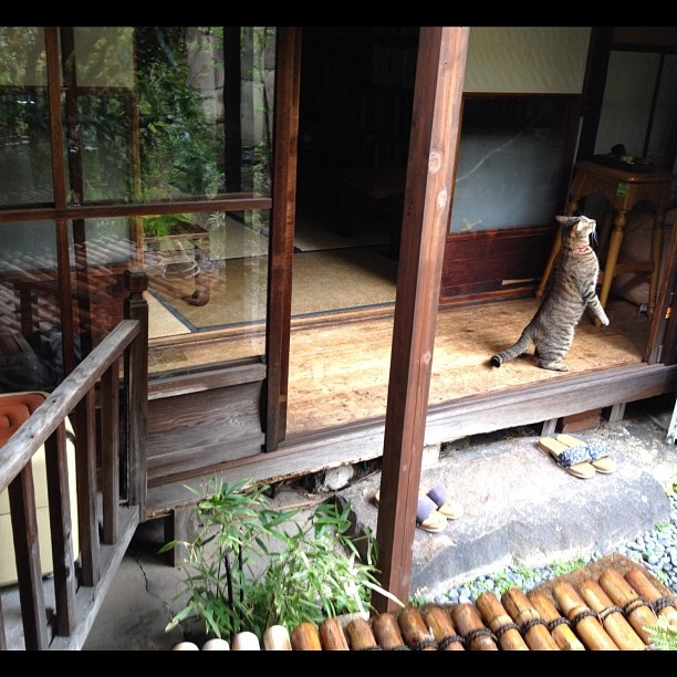 kotoba no haoto. a tranquil nishijin machiya with books, great food & a love for cats