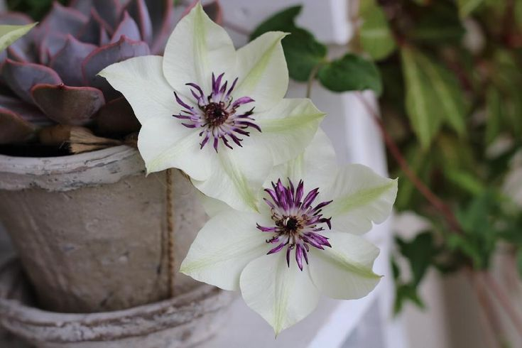 はじめさんが投稿した画像です。他のはじめさんの画像も見てませんか?|おすすめの観葉植物や花の名前、ガーデニング雑貨が見つかる!🍀GreenSnap(グリーンスナップ)
