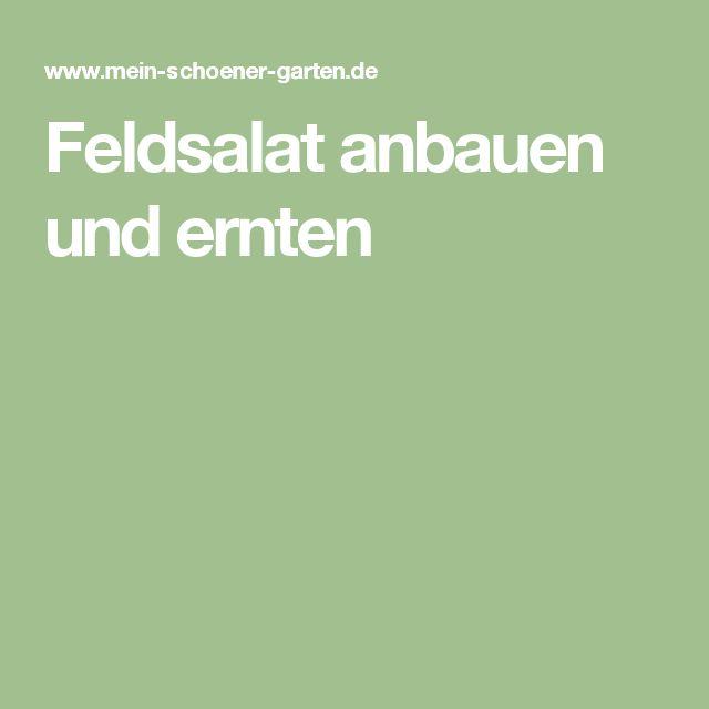 Feldsalat anbauen und ernten