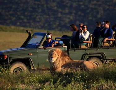 Garden Route safari. See the Big Five from an open safari vehicle and enjoy a guided tour in Franschhoek and Stellenbosch, including wine tasting, 2 days