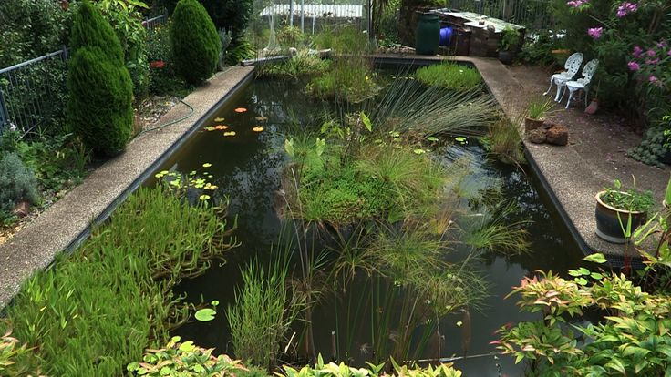 232 best images about swimming pools conversions on for Koi fish pond sydney