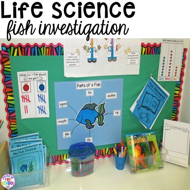 Life science investigation for preschool students - fish - with freebies