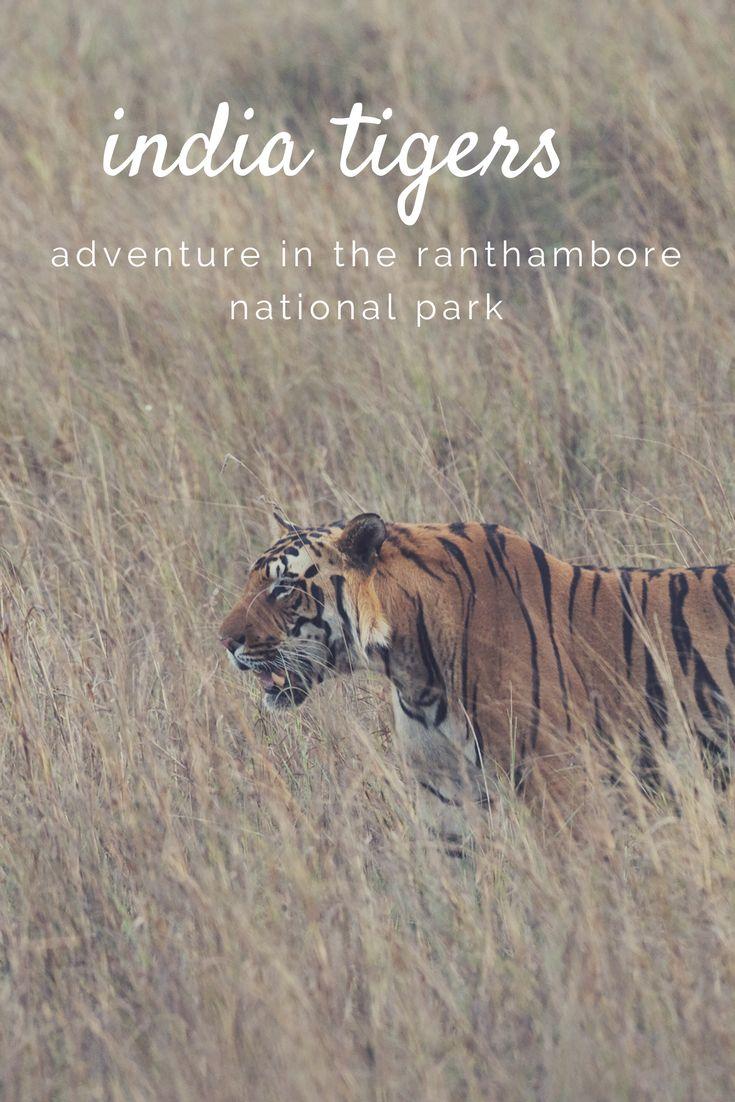 #tiger #wildlife #ranthambore